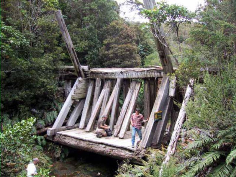 Dancing Camp Kauri Driving Dam
