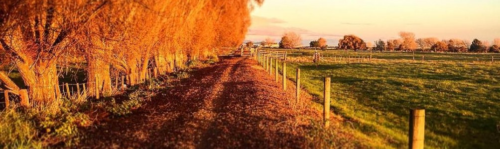 Autumn on the Hauraki Rail Trail is a charming experience